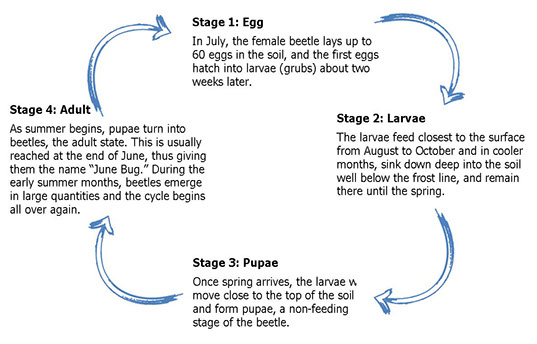 Grub Control Stages
